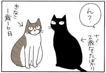 aniwokoetahi-1.jpg