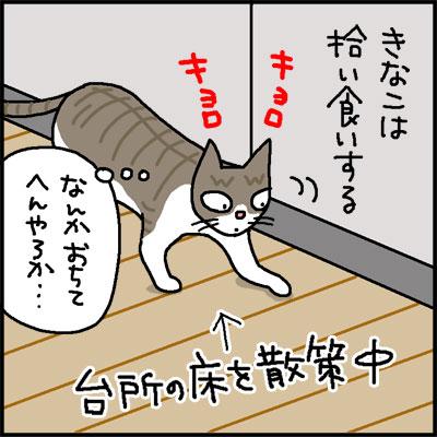 tamaneginokawa-1.jpg