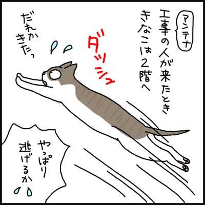 koujinohitogakita-kinako-1.jpg